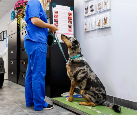 Annual Vaccines & Exams, Blue Mountain Veterinary Services in Clarksburg